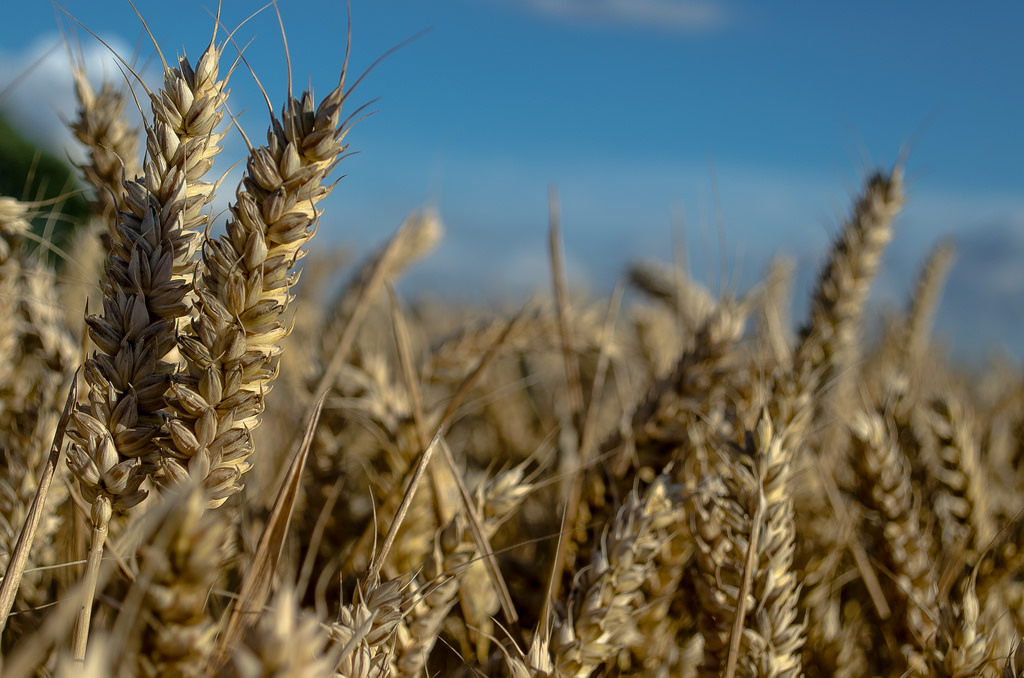 CFTC Charges Food Giants with Wheat Manipulation
