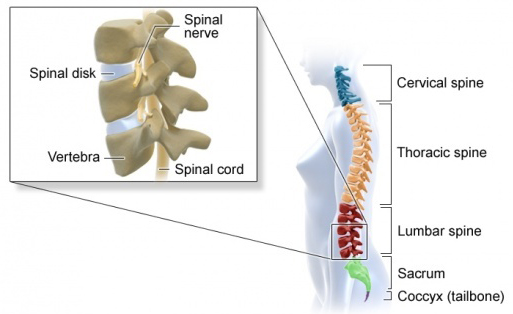Spinal Cord Injury - McEldrew Young